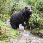 bärenpark-schwarzwald-jga-event